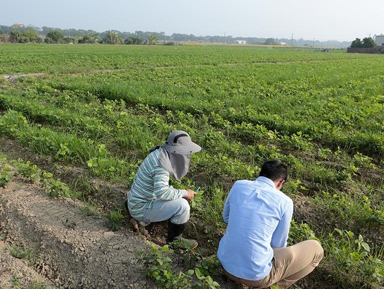 禾乃川豆漿使用在地小農友善耕作的非基改黃豆