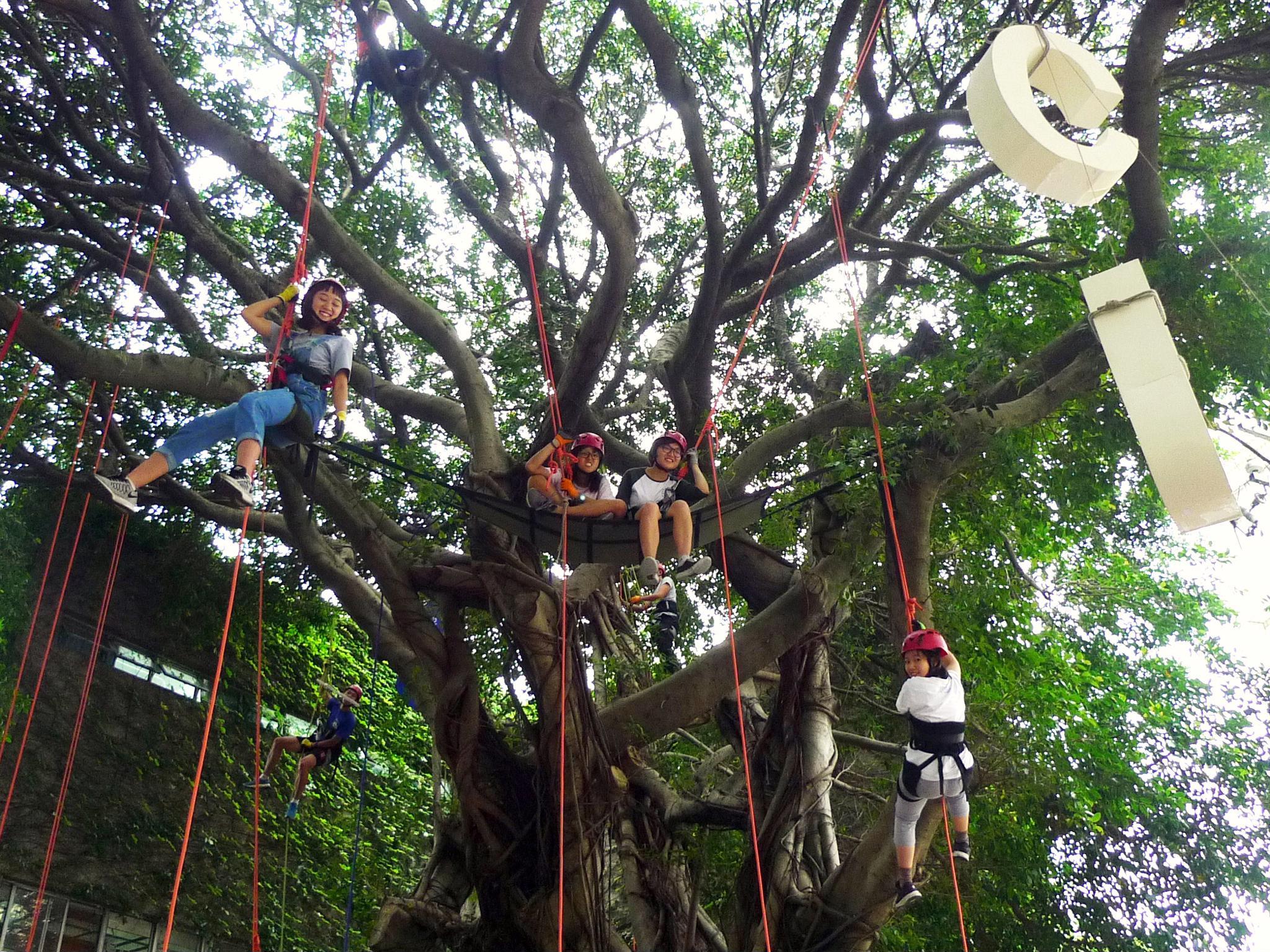 通稿照片10-中原師生攀樹體驗  從不同視角瞭解樹木生態.JPG