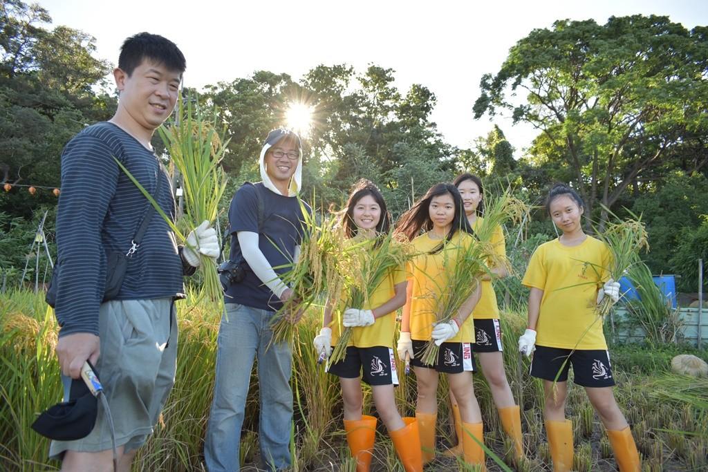 02-武陵高中學生今年3月參與中原大學在霄裡舉行的插秧活動,暑假回來收割自己種的稻子.JPG