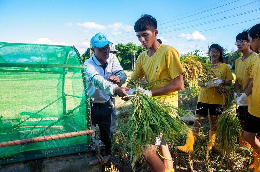03-武陵高中學生在霄裡的農民伯伯指導下將收割的稻子進行脫殼打穀.jpg