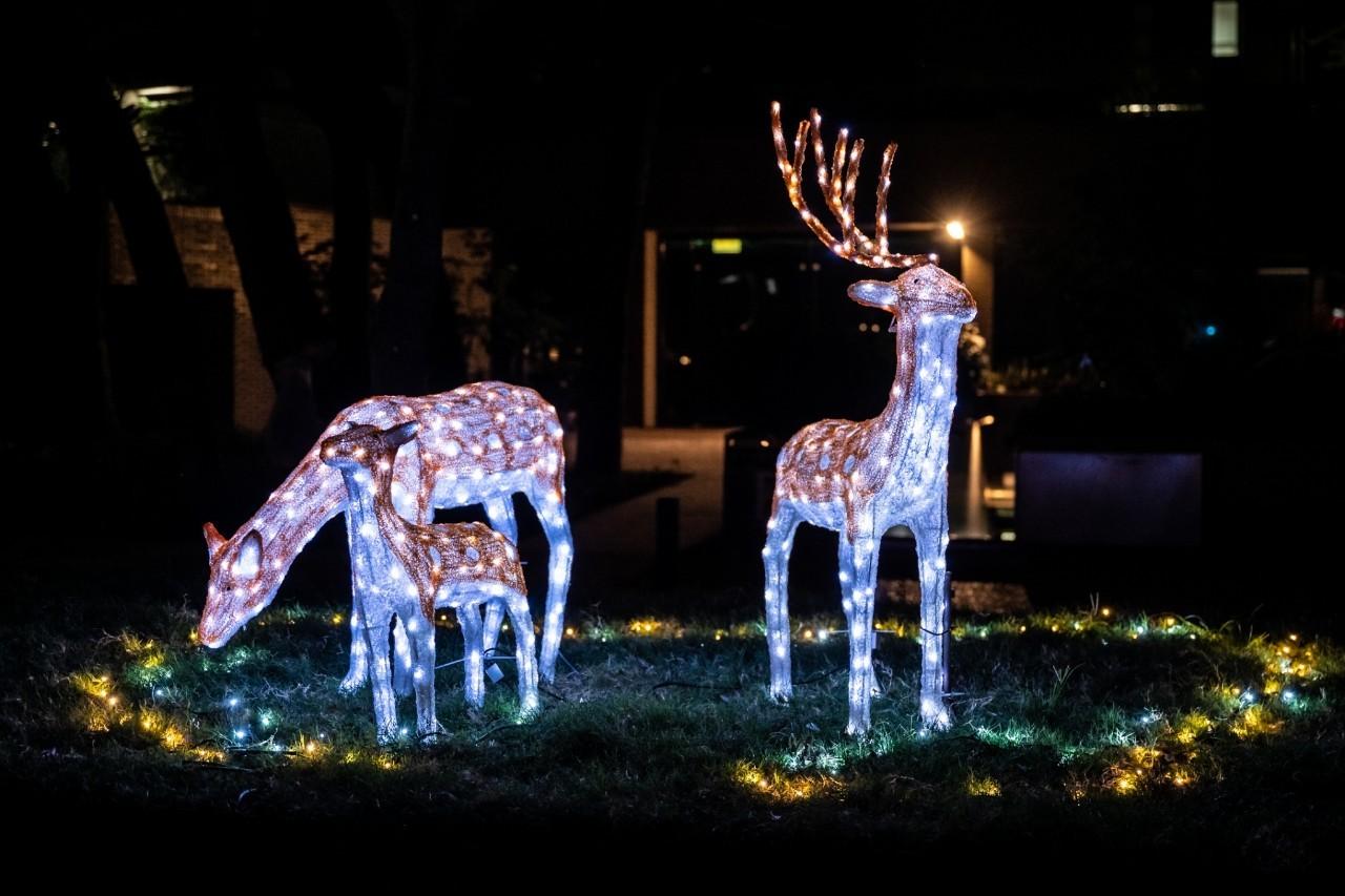 梅花鹿擺設燈飾座落在科學館前和泉源之谷,歡迎大家來拍照打卡.jpg